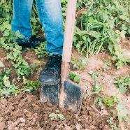 Preparing Clay Soil for new Buffalo Lawn